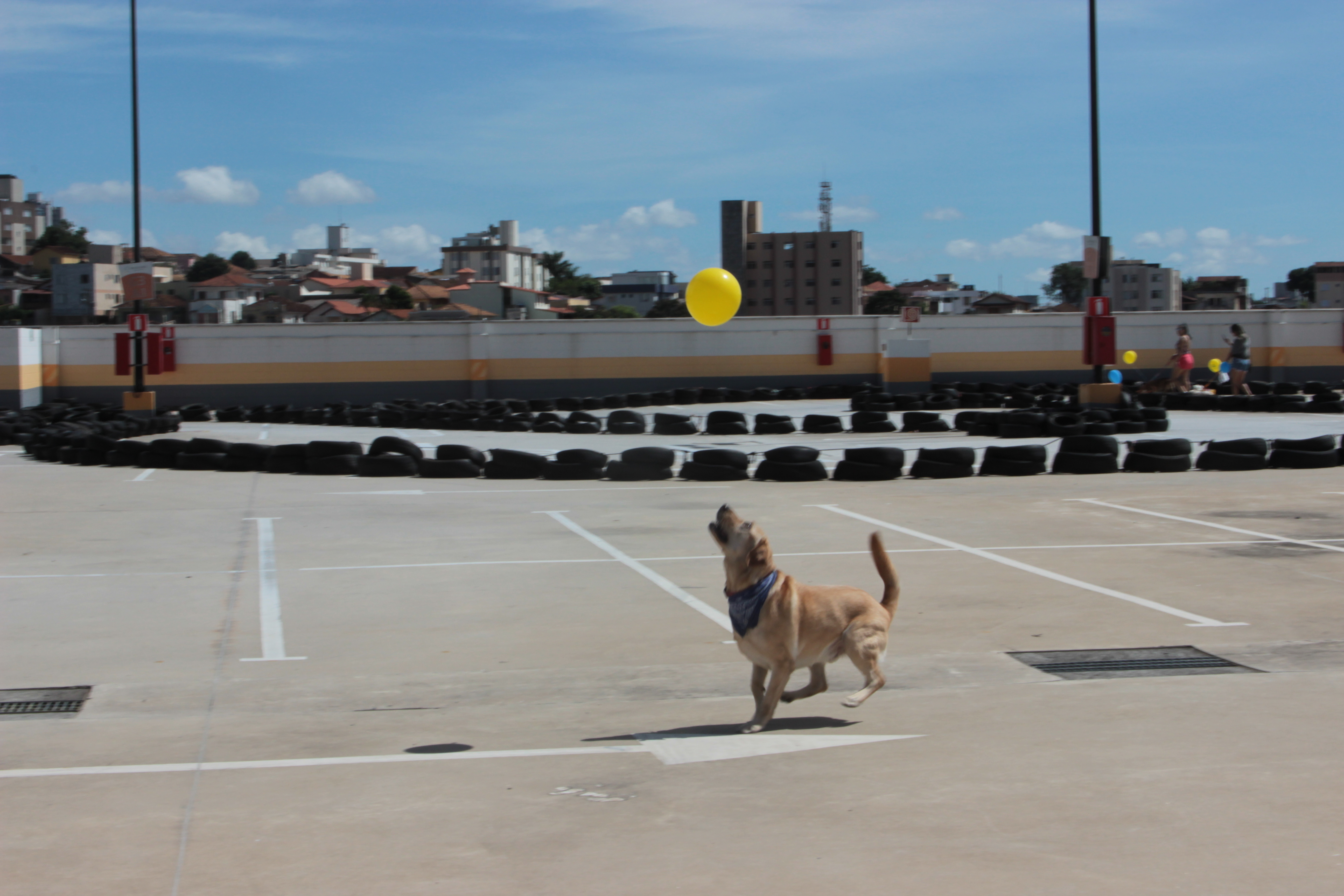 Boulevard Shopping é o segundo a se tornar Pet-friendly em Belo Horizonte